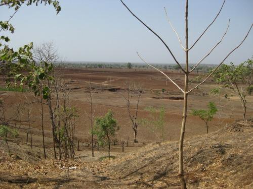 Dry_fields