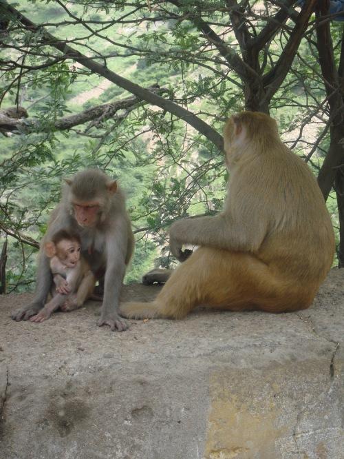 Jaipur_063