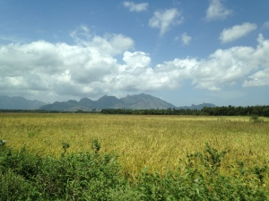 Kanyakumari Rice Fields