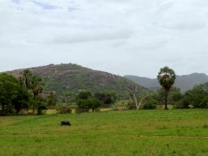 Mulukanoor Scenery
