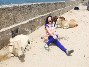 I still get way too excited over the presence of cows everywhere