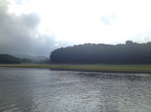 Periyar Tiger Reserve: wild boar in the distance