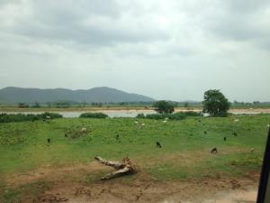 rissa landscape